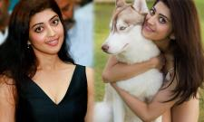 Actress Pranitha Subhash Exclusive Photo Gallery - Sakshi