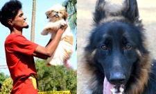 street and treet dogs photo gallery - Sakshi