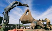 Kenya hauls tuskers aloft in move to reduce human-wildlife conflicts - Sakshi