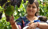 Grapes Festival in Hyderabad Photo Gallery - Sakshi
