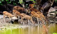 Shamirpet Deer Park Photos  - Sakshi
