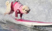 Surf City Surf Dog in Huntington Beach - Sakshi