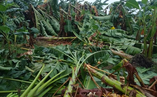 Cyclone Phethai in East Godavari Photo Gallery - Sakshi