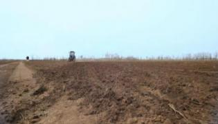 cultivation has decreased from four years
