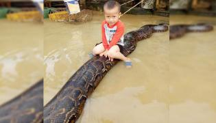 boy played on python : video goes viral