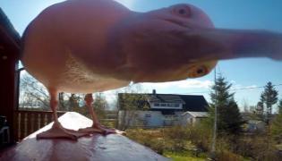 Man Loses Camera To Sneaky Seagull - Sakshi