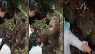 Monkey Punches Girl In China Zoo video goes viral - Sakshi