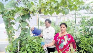 Vegetables and celery cultivation with home harvesting - Sakshi