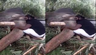 Watch- Elephant sleep With Ilayaraja Music in Tamil Nadu Video Goes Viral - Sakshi