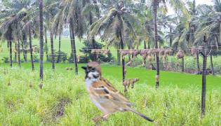 Mahesh is currently Phd on the sparrows - Sakshi