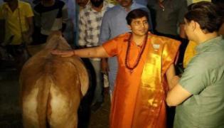 Sadhvi Pragya Says Cow Urine Cured My Breast Cancer - Sakshi