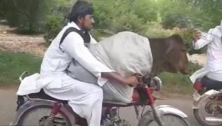 Pakistani Man Drives Bike With Cow - Sakshi