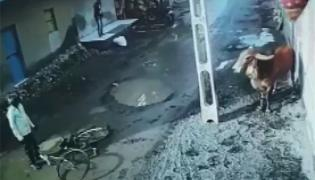 Two People Injured After Attacked By Bull Near Rajkot - Sakshi