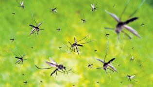 Chinese scientists New Innovation For Mosquitoes - Sakshi