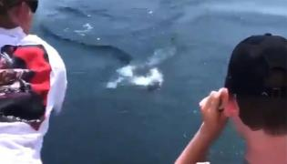 Shark Leaps From Water To Snatch Fish Off Line Nearly Boy Scared - Sakshi