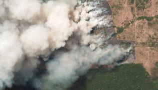 Who Burn The Amazon Forest! - Sakshi