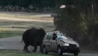 Viral Video, Angry Rhino Attack Car Flips It In Germany - Sakshi