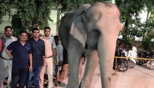 Delhi Last Elephant Lakshmi Rescued After Two Months - Sakshi