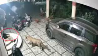 Leopard Pounces On Dog Outside House In Gujarat - Sakshi