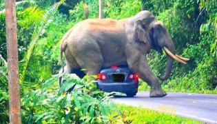 Watch Video,Elephant Sits On Car Narrow Escape For Tourists Inside - Sakshi