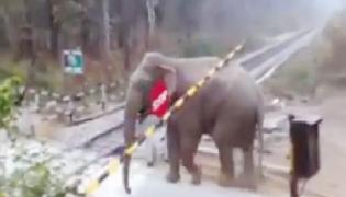 Viral Video: Elephant Crossed Railway Track By Lifting Crossing Gate - Sakshi