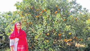 Asha practices zero budget natural farming - Sakshi