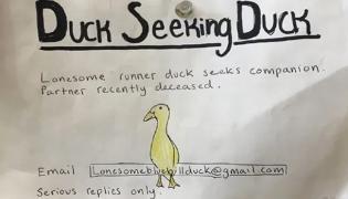 Duck Seeking Duck: Man Ad For Alone Bird - Sakshi