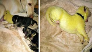 Bright Green Hulk Puppy Born In North Carolina Pics Goes Viral - Sakshi