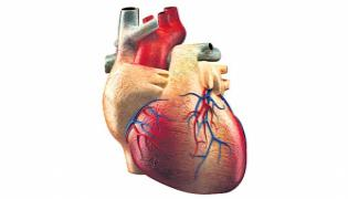 Japanese Scientists Have Succeeded In Attaching The Muscle To The Heart - Sakshi