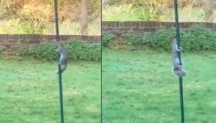 Squirrel Trying To Get Food On Iron Rod Became Viral - Sakshi
