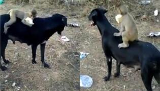 Heartwarming Video: Baby Monkey Rides On Street Dog - Sakshi