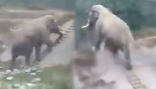 Elephant Climbs Narrow Stairs Video Goes Viral - Sakshi