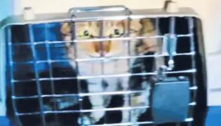 Cat And Lions in Chennai Shipping Horbor From China - Sakshi