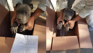 Boy Leaves His Puppy At Michoacan Shelter Home - Sakshi