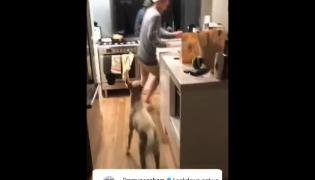 Video Of Jimmy Neesham Play With His Pet Dog During Lockdown