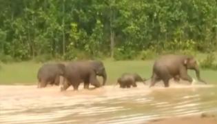 Elephants Enjoying Evening Bath Video Goes Viral - Sakshi