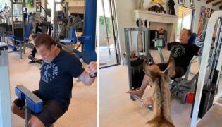 Arnold Schwarzenegger Workout With Donkey Lulu - Sakshi
