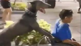 Viral: Dog Push Wheelchair In Mexico - Sakshi
