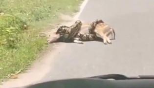 Horrifying Video Python Strangling Deer In Thailand - Sakshi