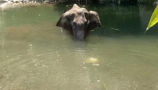 Prakash Javadekar Response Over Elephant Death In Kerala - Sakshi