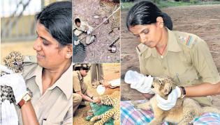 Lion And Wild Animals Women Guard Rasila Vadher Special Story - Sakshi