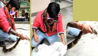 Huge King Cobra Captured In Nainital, Video Viral - Sakshi
