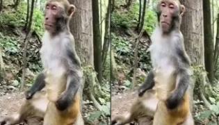 Monkey Takes Power Nap While Sitting Under Tree Video Viral - Sakshi