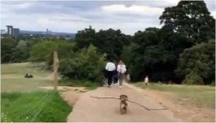 Dog Social Distancing Video Viral On Social Media - Sakshi