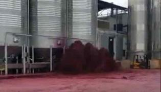 Winery Tank Containing Red Wine Explodes In Spain - Sakshi