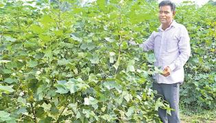 Adilabad Krishi Vignan Kendram Is Farming Raised Bed System - Sakshi