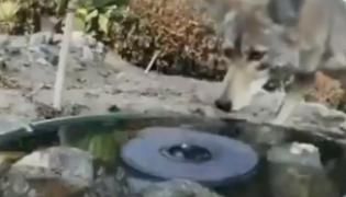 Several Animals Drink From Water Hole To Quench Thirst Video Viral - Sakshi