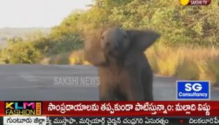 Elephant Dance Viral Video