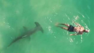 Terrifying Video: Man Swims Near Shark - Sakshi