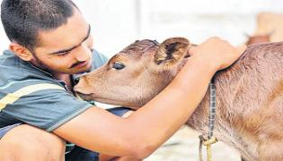Cow Hugging Practiced  Over A Decade Which Controls Anxiety - Sakshi